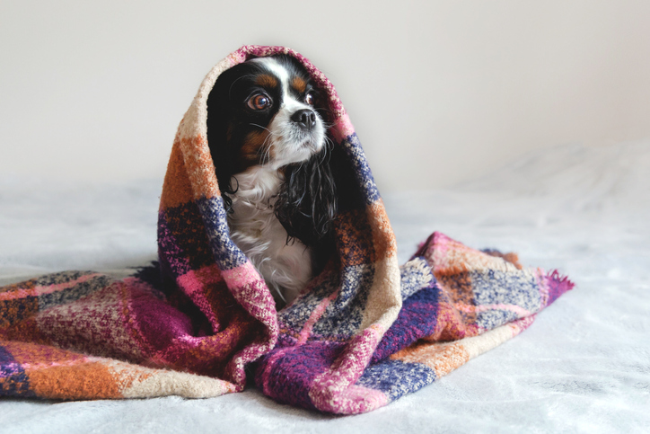 Blanket materials for winter warmth